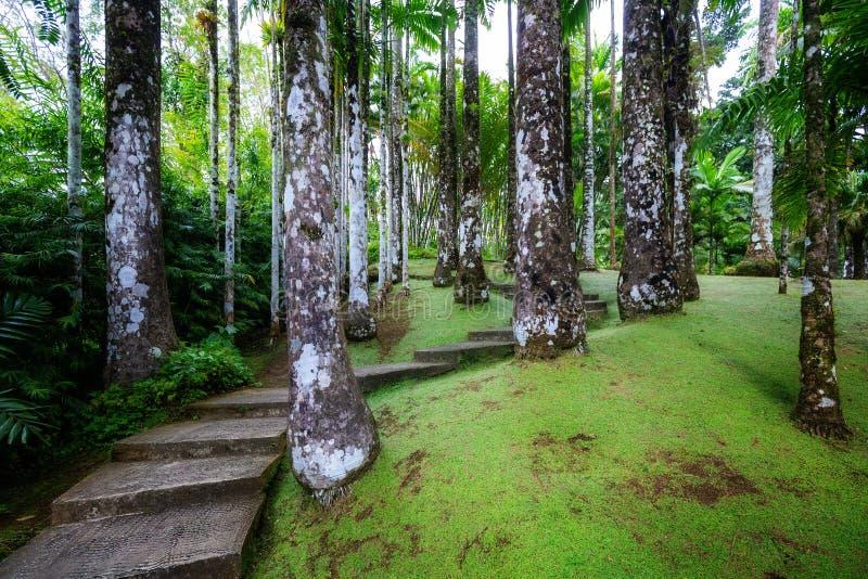Tropical Balata garden. The Balata is a botanical garden located on the Route de. Fort-de-France, Martinique - January 15, 2018: Tropical Balata garden. The stock photos
