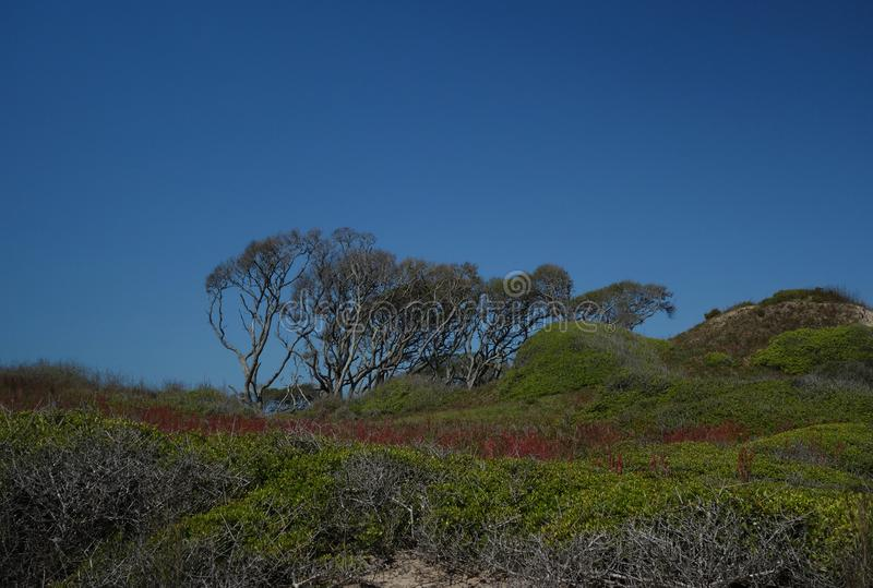 Fort Fisher State Park, OR image stock