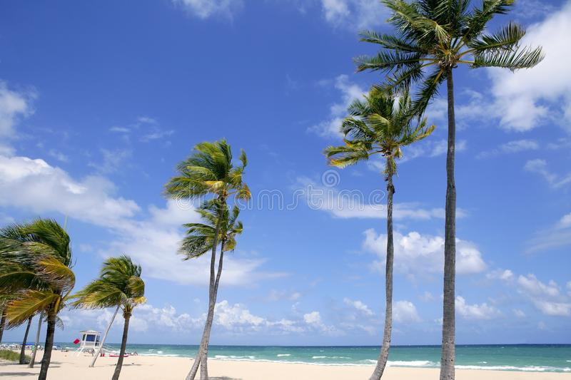 Download Fort Lauderdale Tropical Beach Palm Trees Stock Image - Image: 12582419