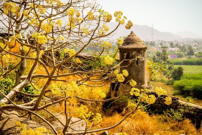 Fort met gele bloemen stock afbeelding