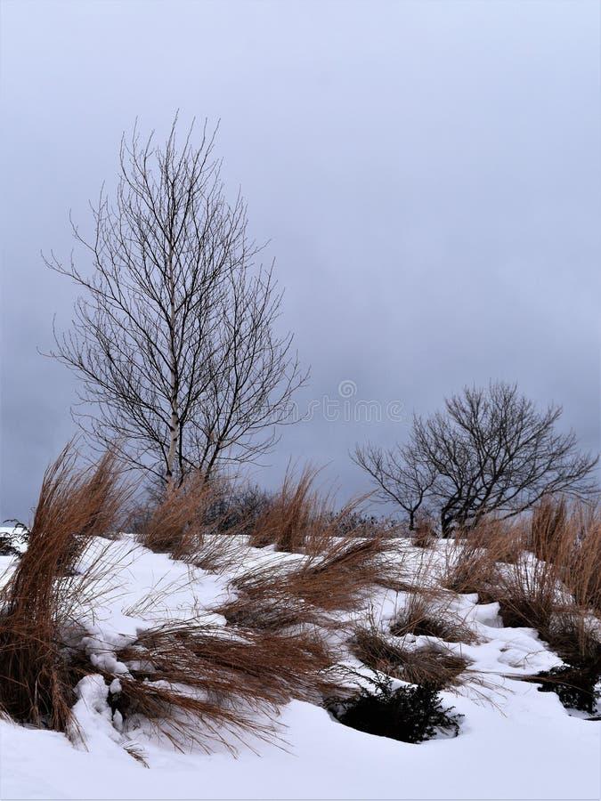 Fort Williams Park, cap Eiizabeth, le comté de Cumberland, Maine, Etats-Unis Nouvelle Angleterre USA photographie stock libre de droits