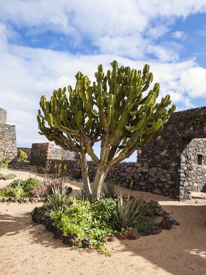 Fortalecimientos antiguos del puerto, Fuerteventura foto de archivo