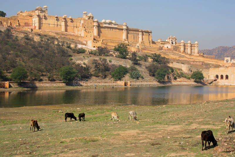 Forte ambarino, perto de Jaipur (India) fotos de stock