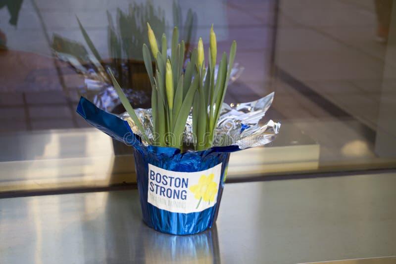 Forte narciso annuale maratona di Boston immagine stock