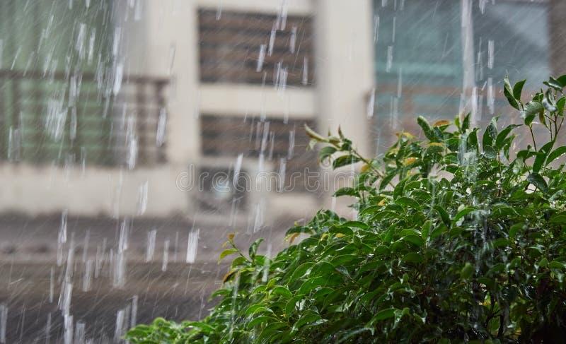 Forte pluie et arbre humide en dehors de la maison photographie stock
