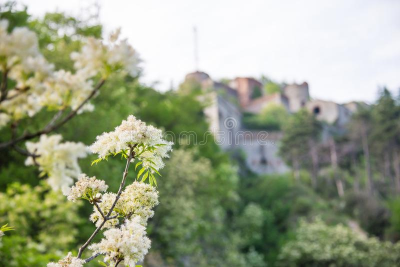 Forte Sperone and a beautiful flower in the foreground royalty free stock photo