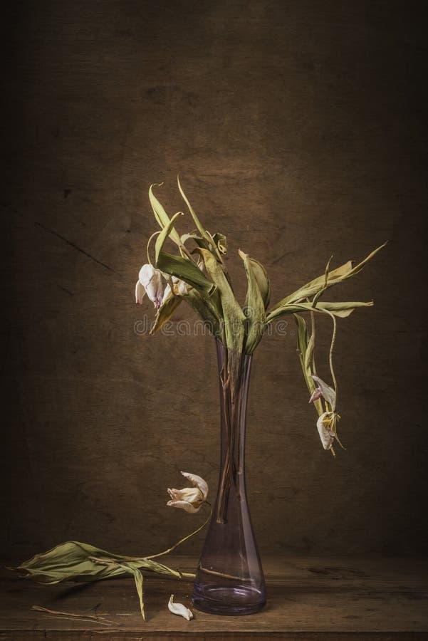 Fortfarande torra blommatulpan för liv royaltyfria foton