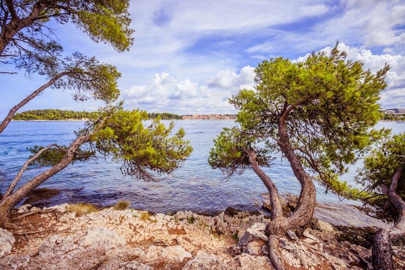 Forti alberi alla bella costa della Croazia, chiara acqua blu fotografie stock libere da diritti