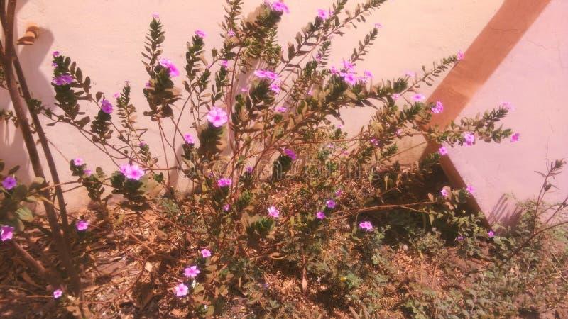 Fortleva blommaväxten royaltyfri bild