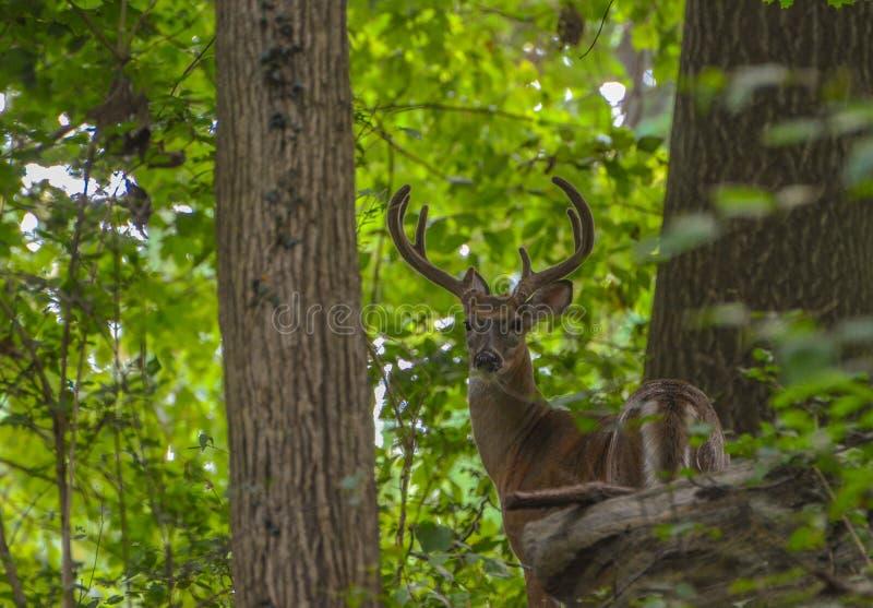 Fortuna nella foresta fotografia stock libera da diritti