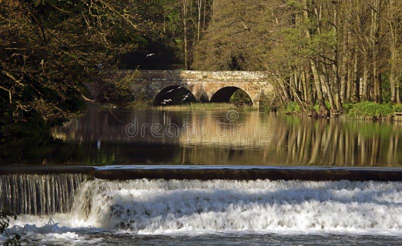 Forum Dorset Fluss Stour Blandford stockbilder