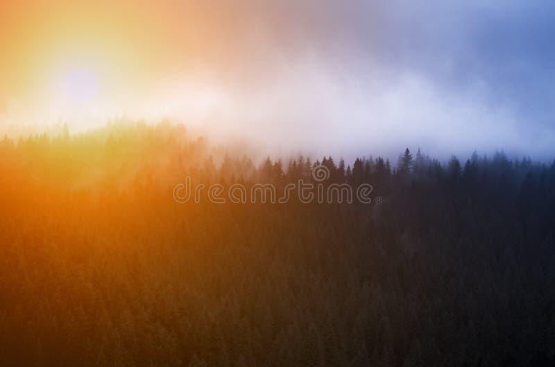 Foschia blu ed alba sopra i pini nella foresta nelle montagne fotografia stock libera da diritti