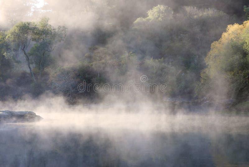 Foschia della foresta pluviale immagini stock libere da diritti