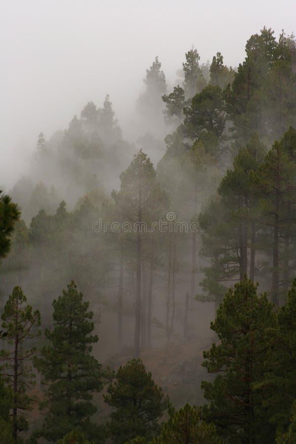 Foschia della montagna fotografia stock
