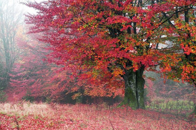 Foschia di autunno immagini stock