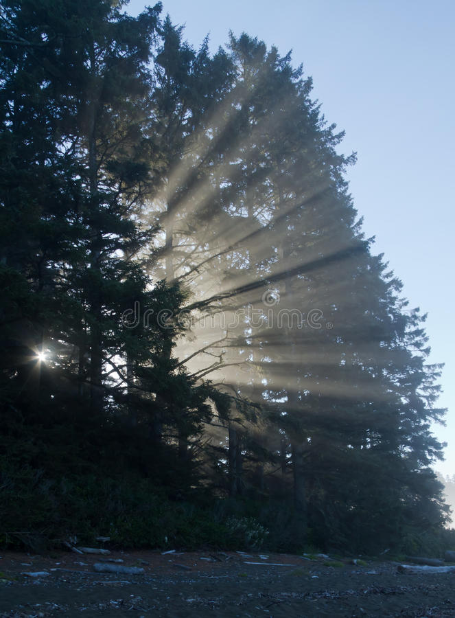 Foschia di mattina fotografie stock libere da diritti