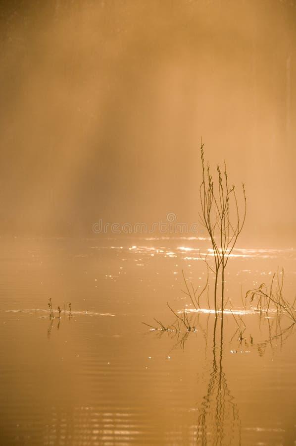 Foschia di mattina fotografia stock