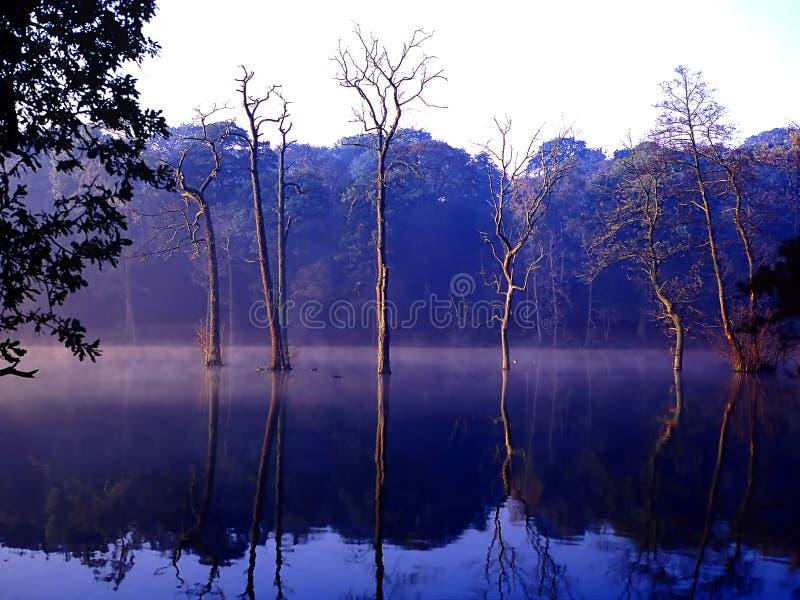 Foschia di sera del lago Clumber fotografia stock