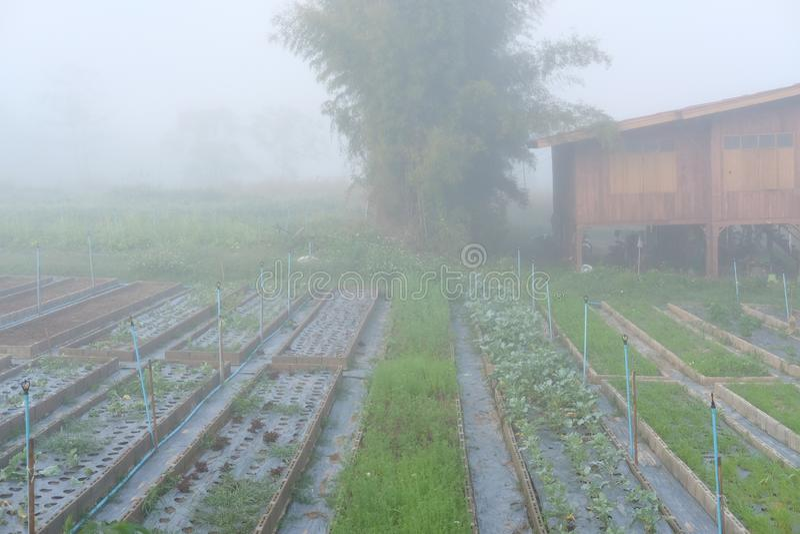 foschia & nebbia in orto Piantagione in azienda agricola immagini stock libere da diritti