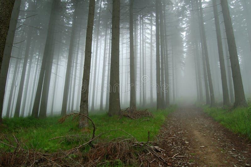 Foschia nella foresta fotografie stock libere da diritti