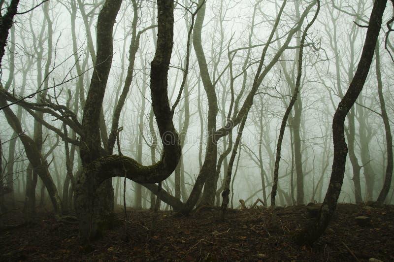 Foschia nella foresta di autunno fotografie stock