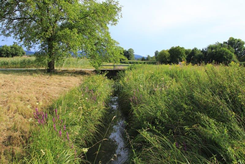 Fossato di Ooser Landgraben, fiume attraverso Sandweier, distretto di Baden-Baden, con il ponte, acqua bassa, letto asciutto fotografia stock libera da diritti