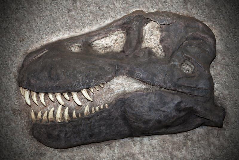 Download Fossi stock image. Image of paleontology, deposit, evolution - 22555287