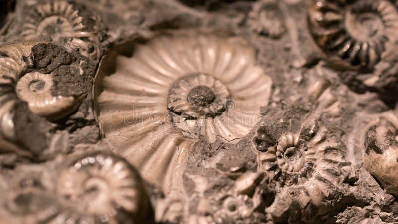 Fossiel & Ammoniet voor brandstofenergie royalty-vrije stock fotografie