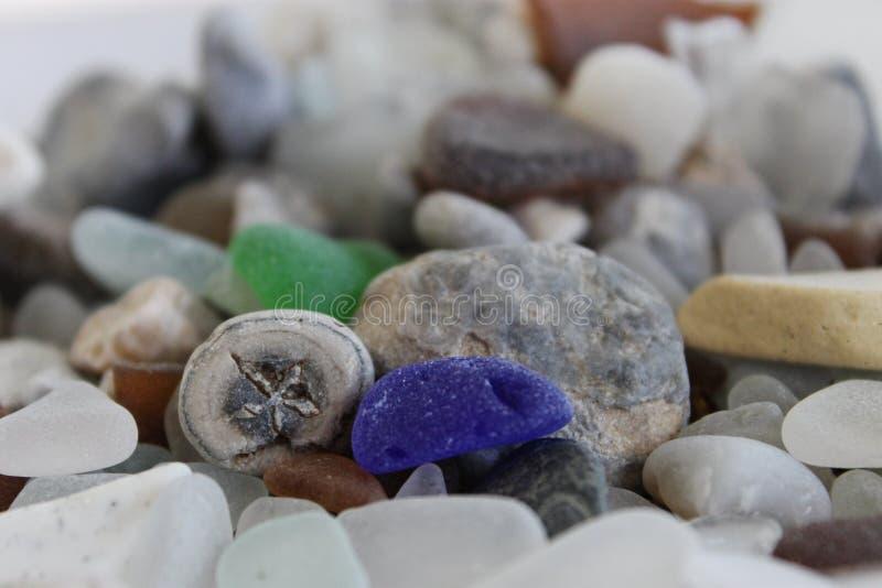 Fossiel en Glas stock afbeelding