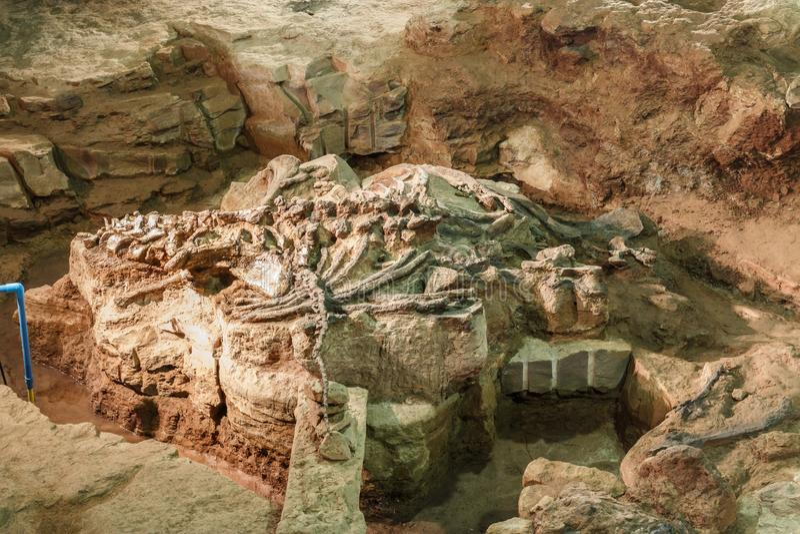 Fossiel van Phuwiangosaurus-sirindhornae bij Sirindhorn-Museum, Kalasin, Thailand Dichtbij volledig fossiel stock foto's