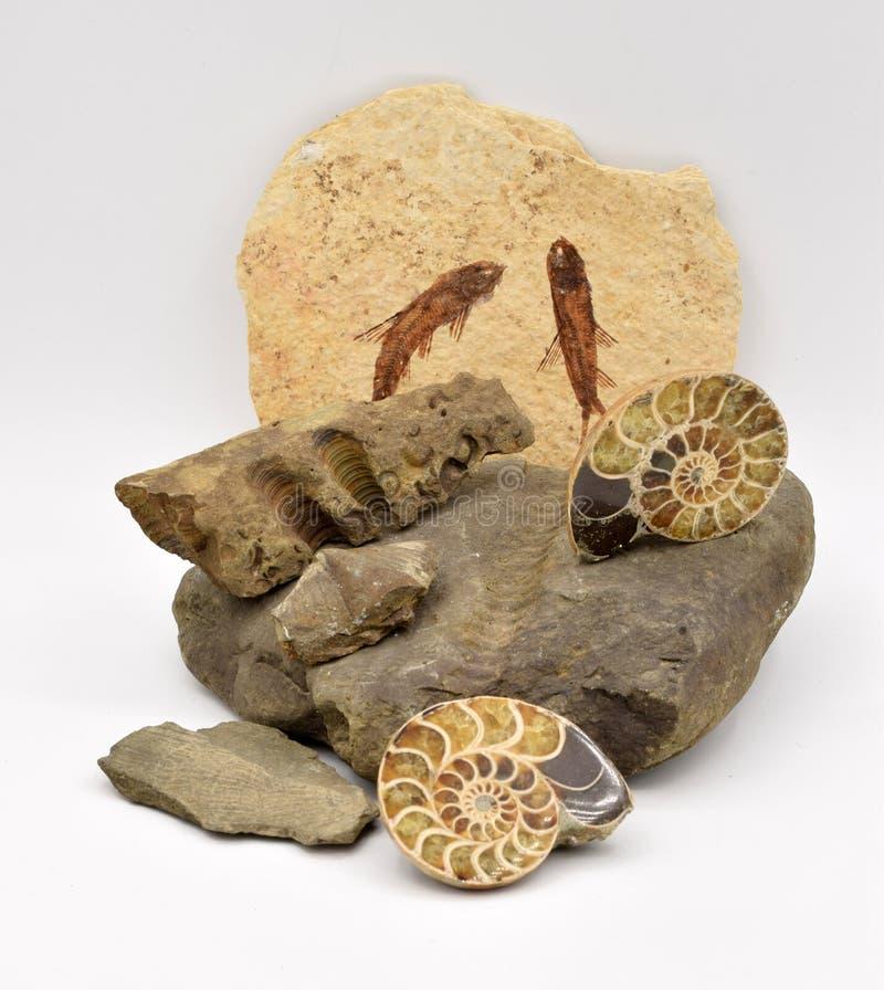 Fossiele die Dieren op Witte Achtergrond worden geschikt royalty-vrije stock foto's