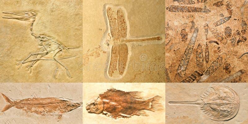 Fossielen royalty-vrije stock afbeelding