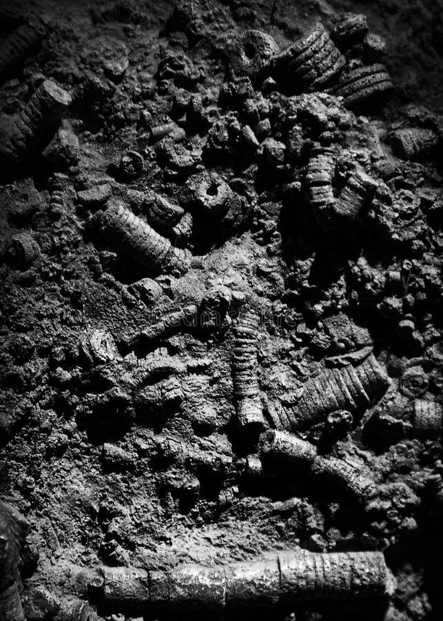 fossielen stock foto