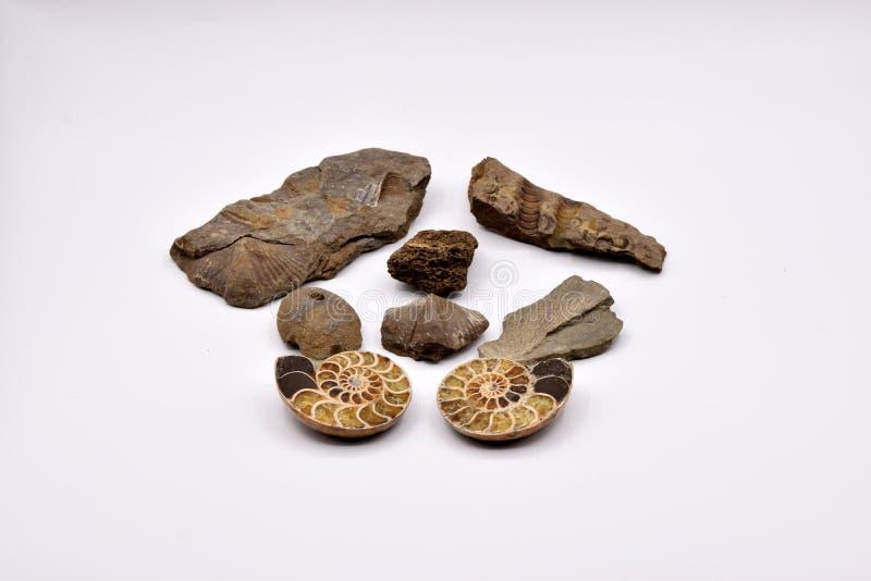 Fossielen en Gemmen op Witte Achtergrond stock afbeeldingen