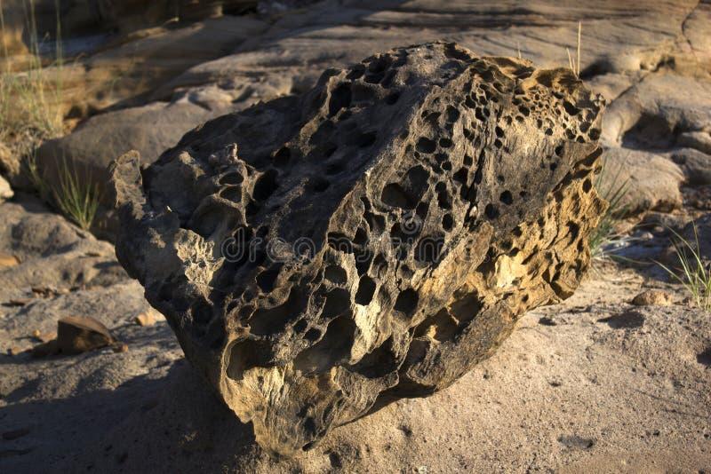 Fossielenpark in Gujarat royalty-vrije stock fotografie
