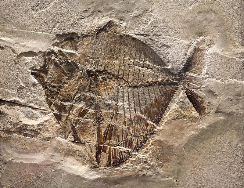 fossil fotografering för bildbyråer