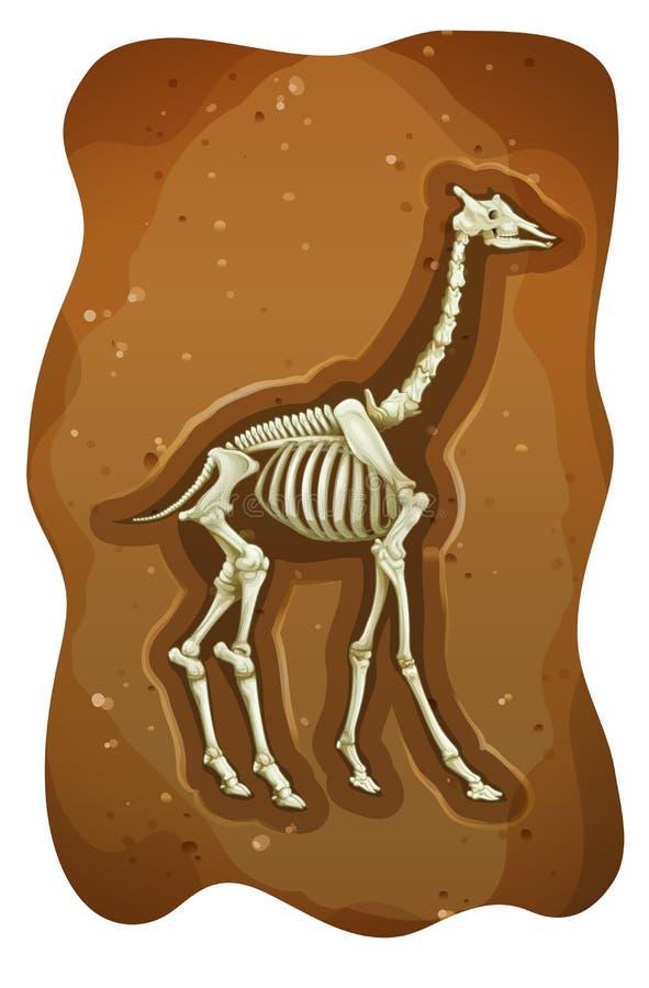 fossil ilustração do vetor