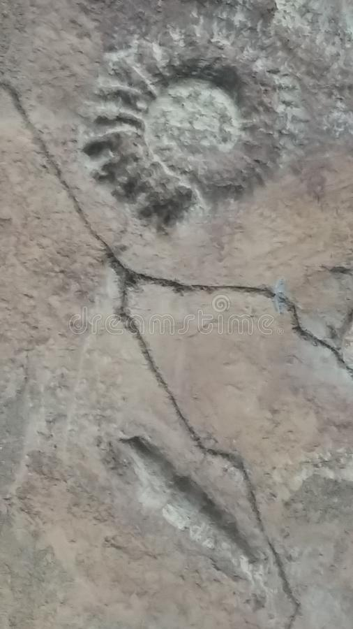 fossil royaltyfria bilder