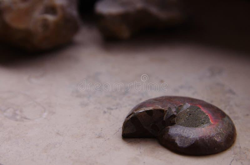 Fossil_1 imagen de archivo