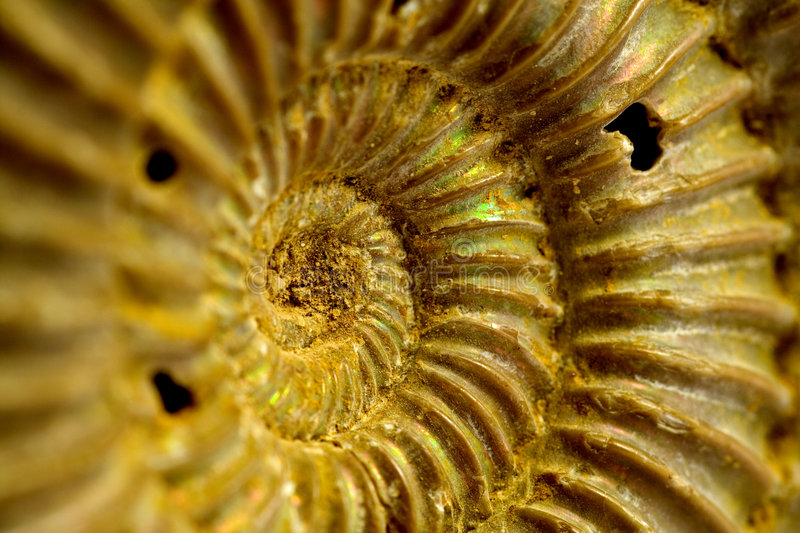 Fossil of ammonites stock photos