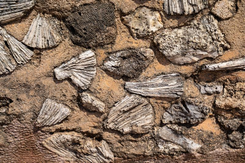 Fossil and coral built into the walls of Galle Fort in Sri Lanka stock images