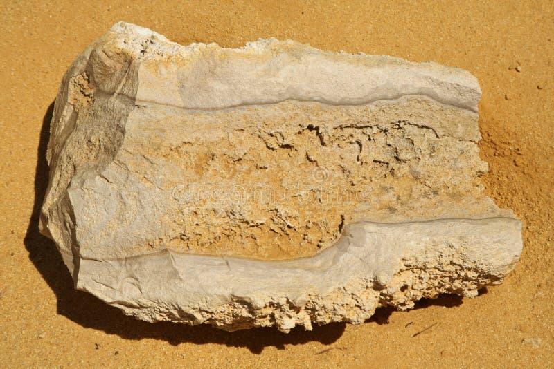 Fossil On The Desert,Western Australia Stock Photo