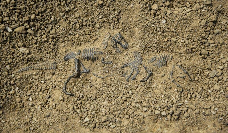 Fossil- dinosauriekamp royaltyfria foton