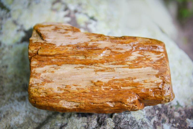 Fossil för förstenats trä - det gamla trät blir stenen vid naturligt arkivfoto