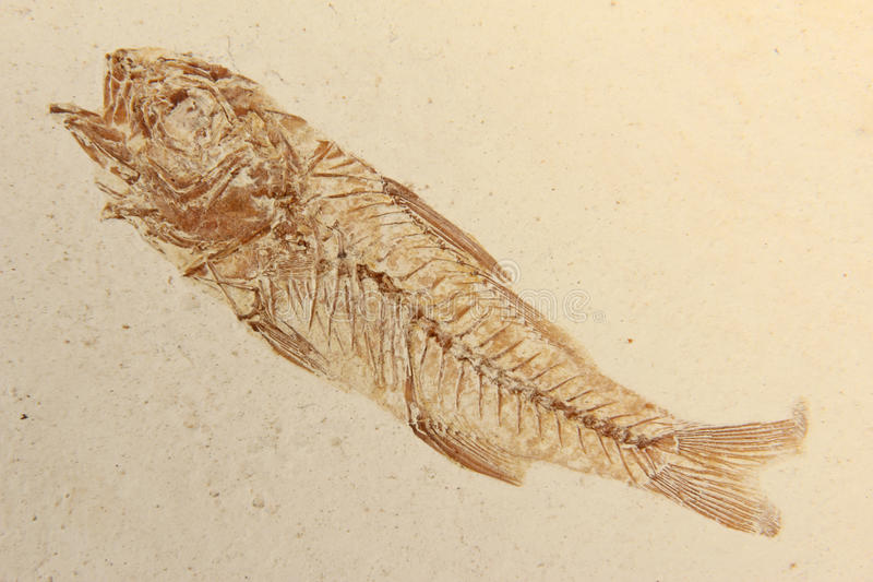 Fossil fish stock photos