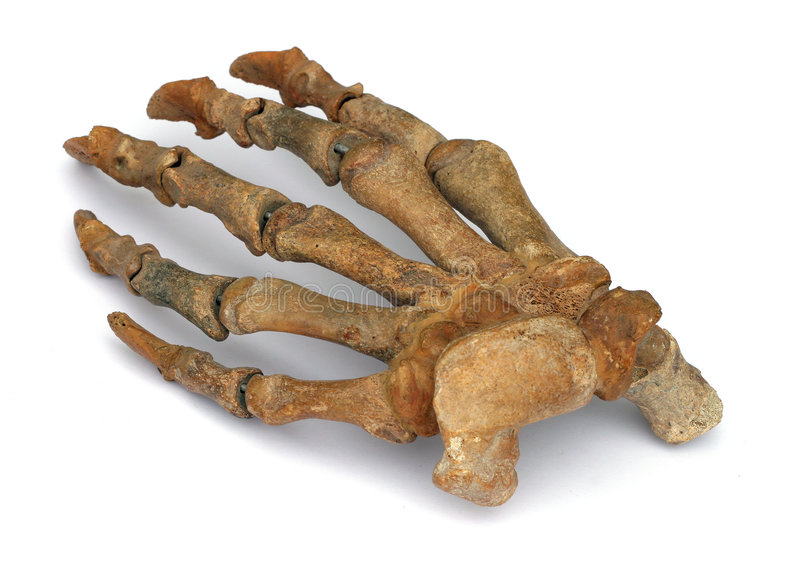 Fossil hand royalty free stock photo