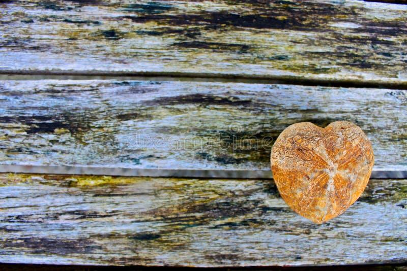 Fossil heart urchin background stock photos