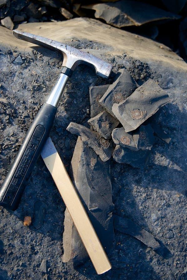 Fossil- jakt bearbetar ammoniten Charmouth Dorset England arkivfoton