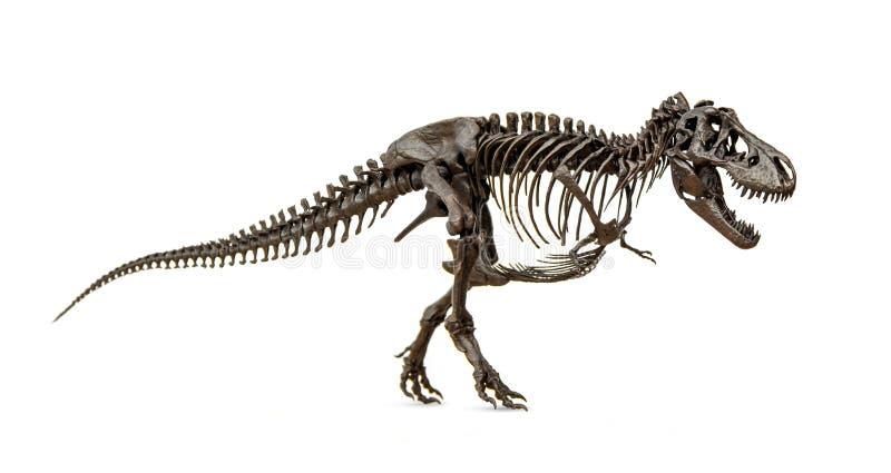 Skeleton Of Dinosaur Tyrannosaurus Rex Stock Image - Image ...