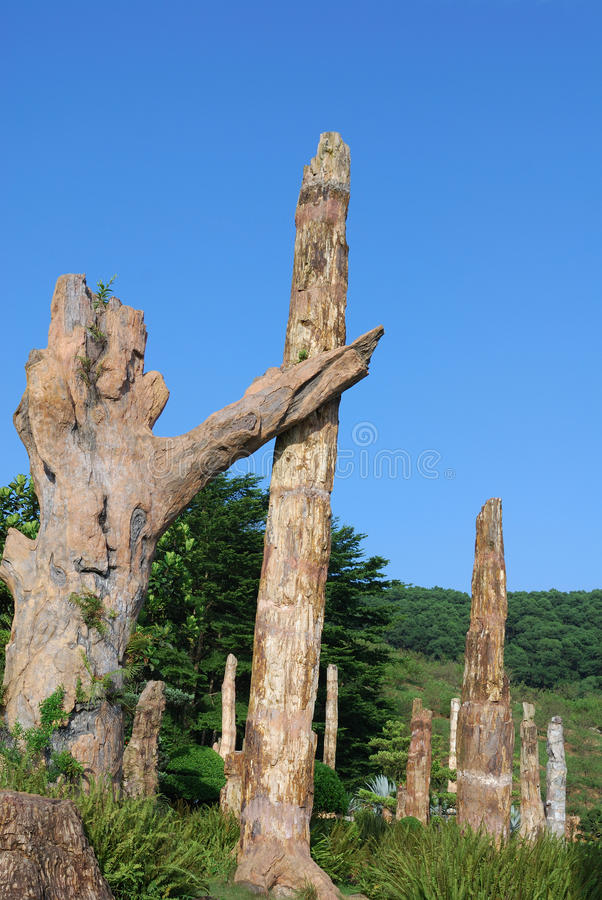 fossil som looks som där plattforer treen royaltyfri foto